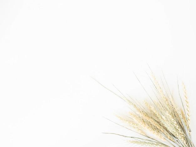 Kłosy Pszenicy O Jasnozielonym Pastelowym Odcieniu Na Białym Tle Premium Zdjęcia