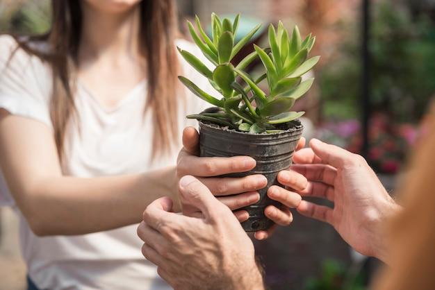 Kobieta daje doniczkowej roślinie jej klient Darmowe Zdjęcia