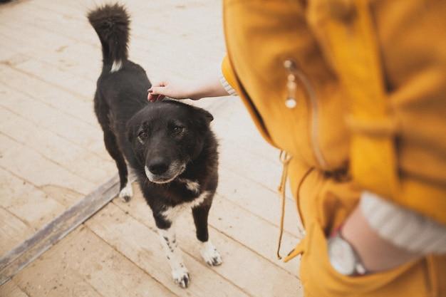 Kobieta głaszcząca dobrego starego bezpańskiego zagubionego psa. Premium Zdjęcia