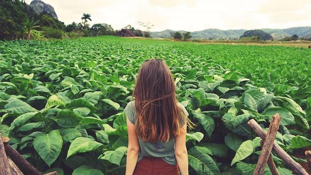 Kobieta, Patrząc Na Zielone Pole Tytoniu Na Kubie Premium Zdjęcia