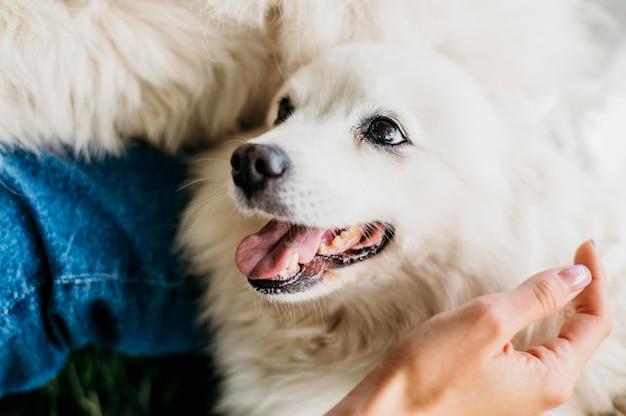 Kobieta, Pieszczoty Uroczego Psa Premium Zdjęcia
