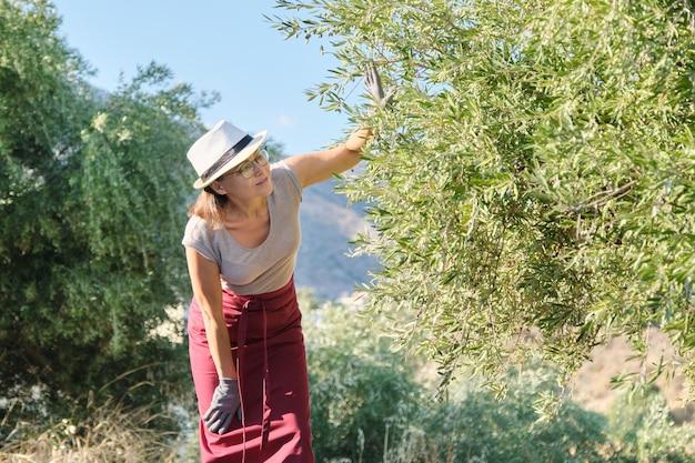 Kobieta Pracownik Farmy Oliwek, Tło Ogród Oliwny W Górach Premium Zdjęcia