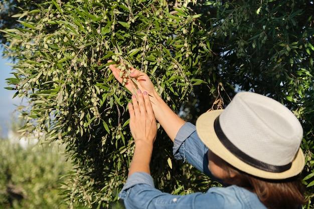 Kobieta Pracująca W Słonecznym Ogrodzie Oliwnym, Premium Zdjęcia