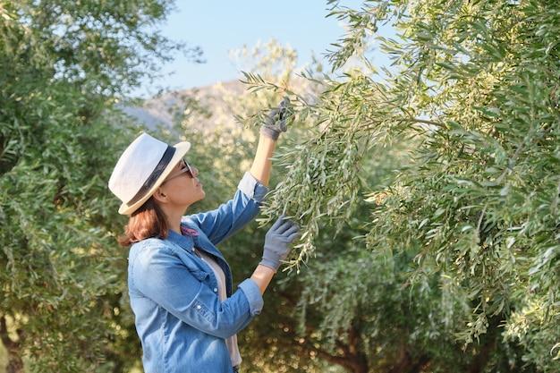 Kobieta Pracuje W Oliwnym Ogródzie, Halny Tło Premium Zdjęcia
