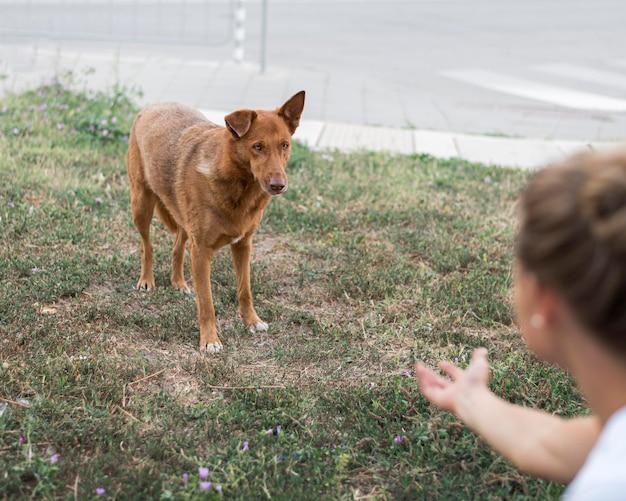 Kobieta Próbuje Wezwać Psa Ratowniczego Do Schroniska Adopcyjnego Darmowe Zdjęcia