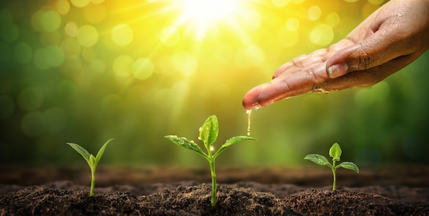 Kobieta Ręka Podlewania Do Młodych Roślin Naturalnego Tła Premium Zdjęcia