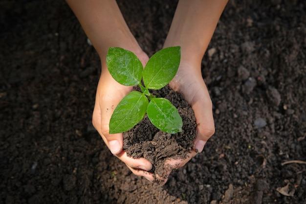 Kobieta ręka trzyma drzewo. środowisko dzień ziemi w rękach drzew rosnących sadzonek Premium Zdjęcia