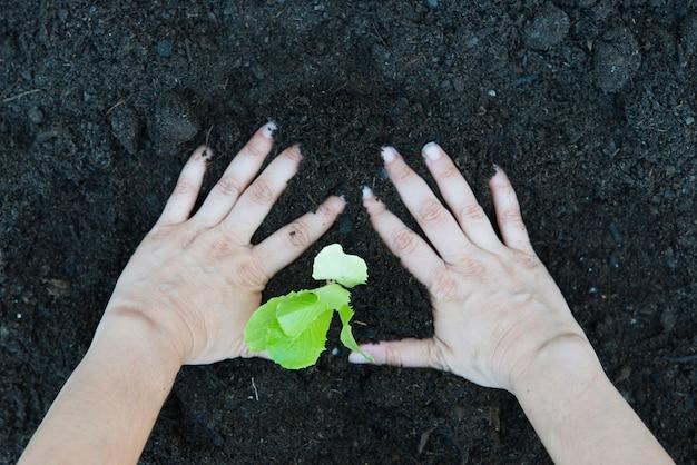 Kobieta Sadzenia Sałaty W Ogrodzie Domu Premium Zdjęcia