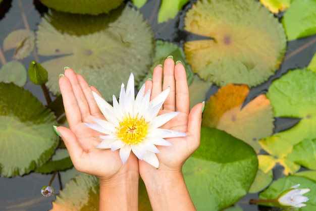 Kobieta Trzyma Kwiat Lotosu - Waterlily Darmowe Zdjęcia