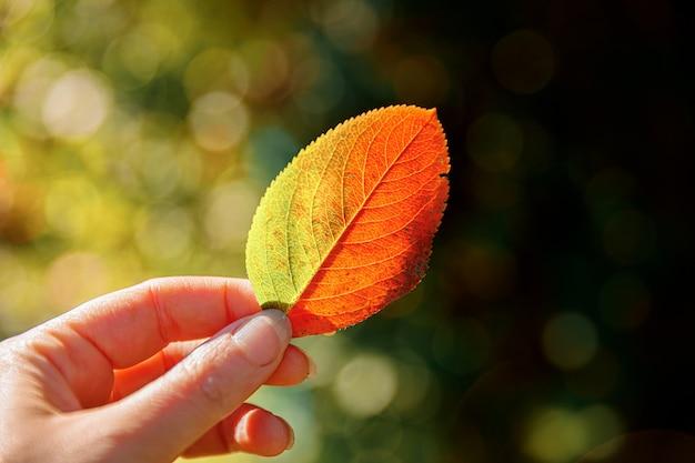 Kobieta Trzymając Się Za Ręce Czerwony Liść Pomarańczy Premium Zdjęcia
