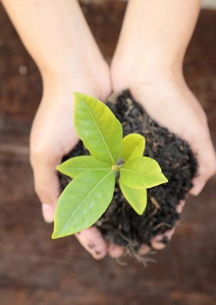 Kobiety Ręka Trzyma Małej Zielonej Drzewnej Rośliny Premium Zdjęcia