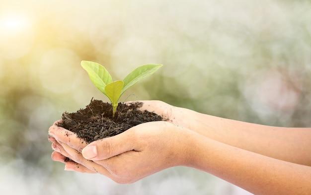 Kobiety Ręka Trzyma Troszkę Zielonej Drzewnej Rośliny Premium Zdjęcia