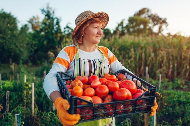 Kobiety średniorolny mienia pudełko czerwoni pomidory na eco gospodarstwie rolnym Premium Zdjęcia