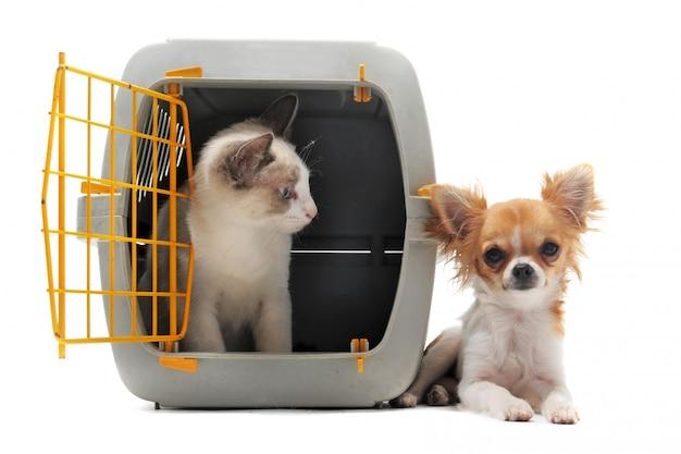 Kociak W Nosidełku Dla Zwierząt Domowych I Chihuahua Premium Zdjęcia