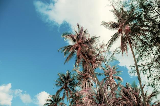 Kokosowy drzewo suszy przy niebem. Premium Zdjęcia