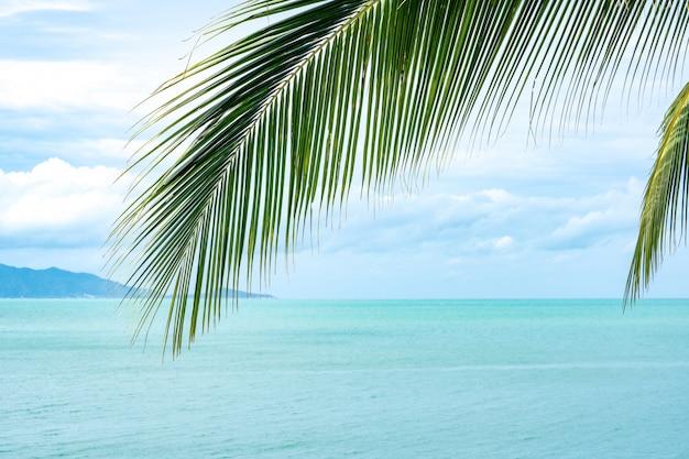 Kokosowy Liść Na Morza I Niebieskiego Nieba Tle Premium Zdjęcia