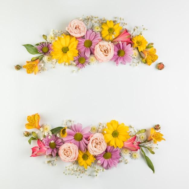 Kolorowa kwiat dekoracja z przestrzenią dla pisać tekscie odizolowywającym na białym tle Darmowe Zdjęcia