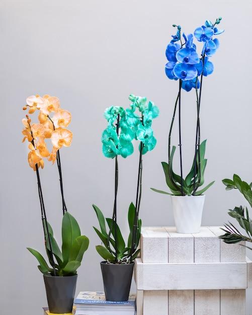 Kolorowe Kwiaty Orchidei Moth W Doniczce Premium Zdjęcia