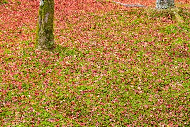 Kolorowe Liście Spadające W Ogrodzie Premium Zdjęcia
