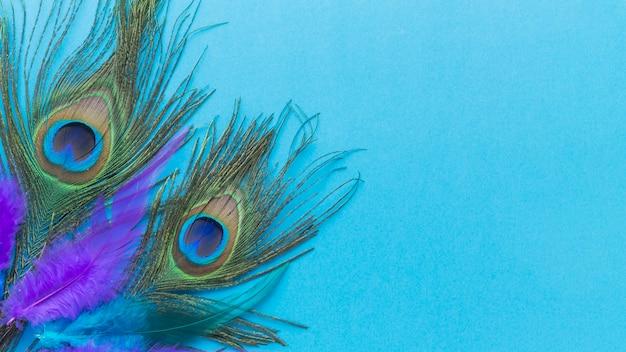 Kolorowe Pawie Pióra Z Miejsca Kopiowania Darmowe Zdjęcia