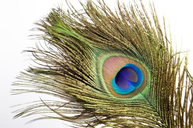 Kolorowe pawie pióro. Premium Zdjęcia