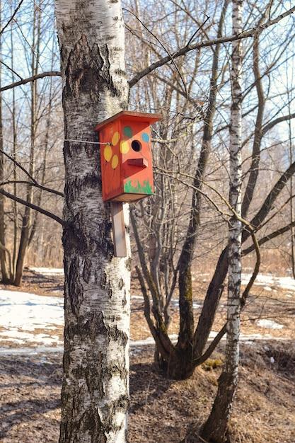 Kolorowe Ptaszarnia Waży Na Drzewie W Wiosennym Parku Premium Zdjęcia