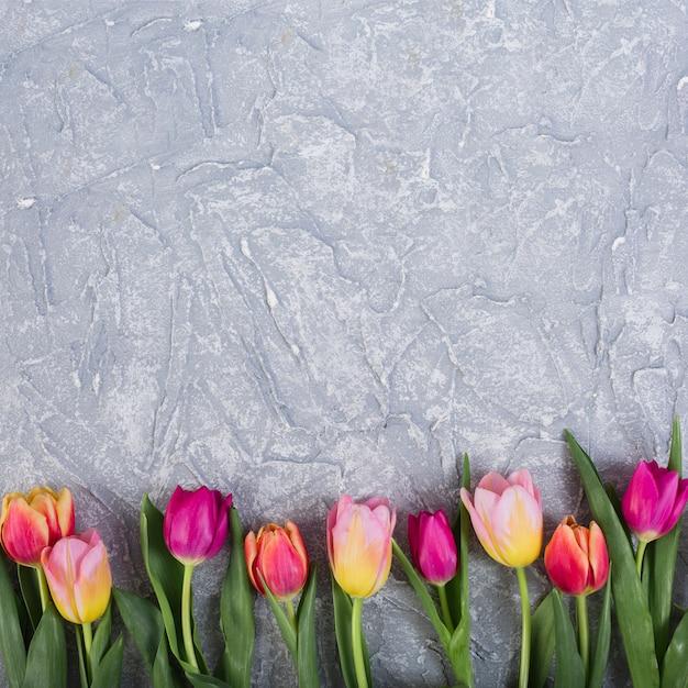 Kolorowe Tulipany W Rzędzie Darmowe Zdjęcia
