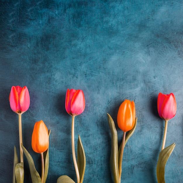 Kolorowi Tulipanowi Kwiaty Na Błękita Stole Darmowe Zdjęcia