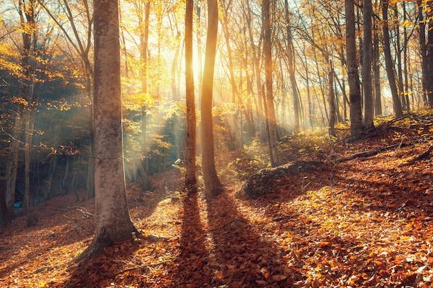 Kolorowy jesień krajobraz z drzewami i pomarańczowymi liśćmi. Premium Zdjęcia