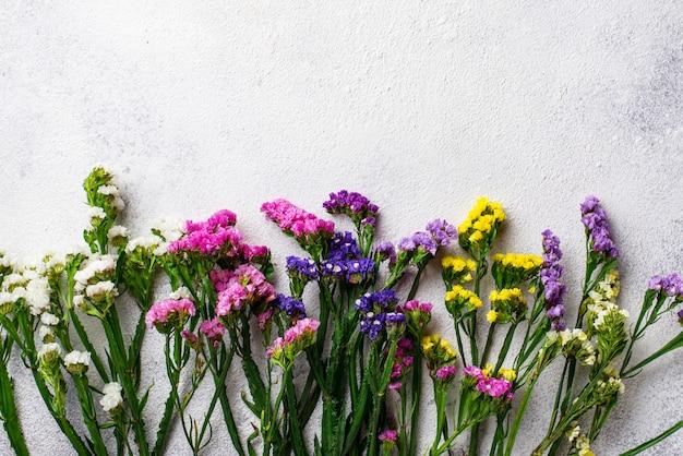 Kolorowy limonium kwiat na bielu Premium Zdjęcia