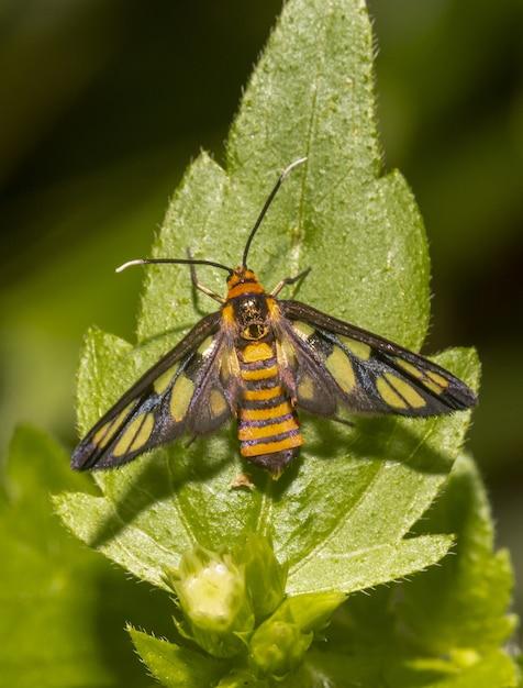 Kolorowy Motyl Na Liściu Z Bliska Darmowe Zdjęcia