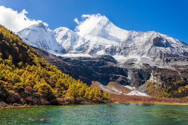 Kolorowy W Jesień Lesie I śniegu W Rezerwacie Przyrody Yading, Ostatni La La Shangri Premium Zdjęcia