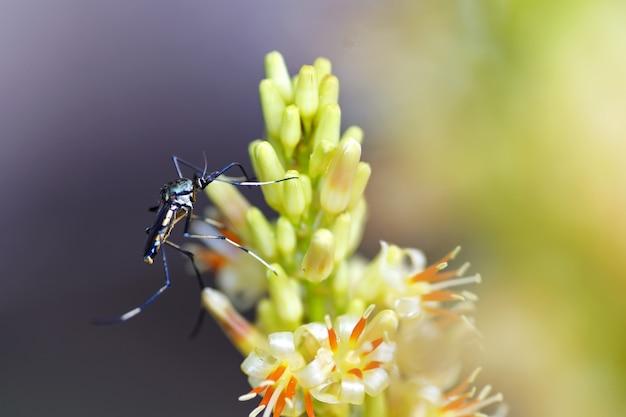 Komary Jedzą Kwiaty Premium Zdjęcia