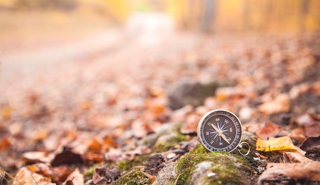 Kompas W Jesiennych Liściach. Las Premium Zdjęcia