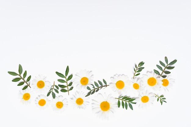 Kompozycja Białych Kwiatów Darmowe Zdjęcia