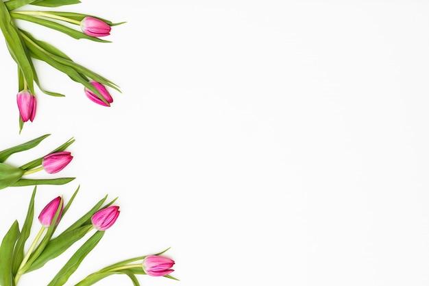 Kompozycja Kwiatów Tulipan Kwitnie Na Białym Tle. Koncepcja Wiosny. Leżał Płasko, Widok Z Góry, Miejsce Premium Zdjęcia