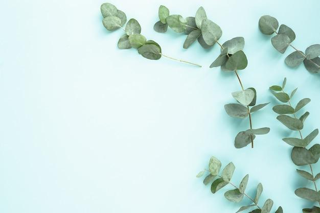 Kompozycja Z Zielonymi Liśćmi Darmowe Zdjęcia