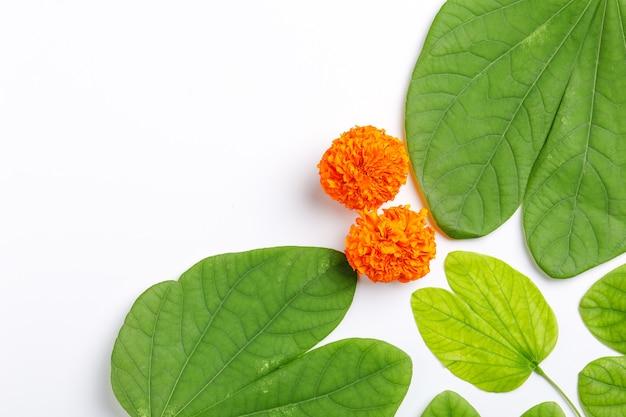 Kompozycja Zielonych Liści I Ryżu Na Indyjski Festiwal Duserae Premium Zdjęcia