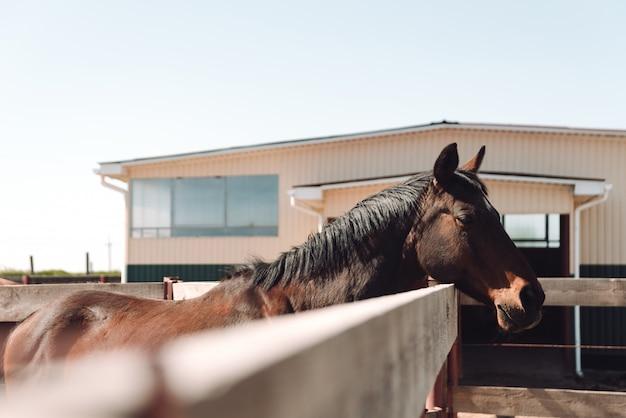 Koń Stoi Na Zewnątrz. Patrząc Na Bok. Darmowe Zdjęcia