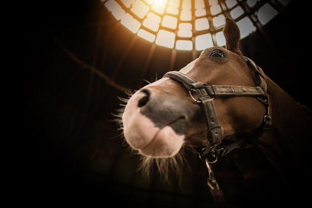 Koń W Ciemnej Stodole Z Nieboskłonowym Elementem Dachu. Premium Zdjęcia