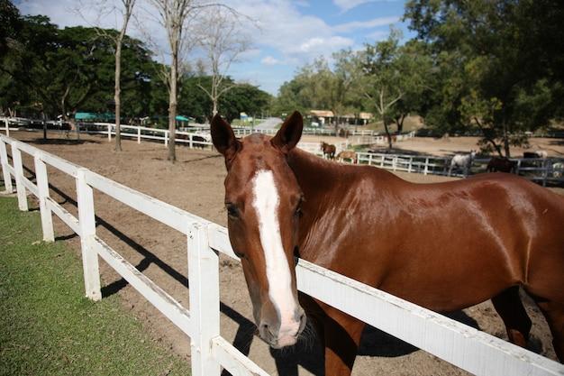 Koń Za Płotem Darmowe Zdjęcia
