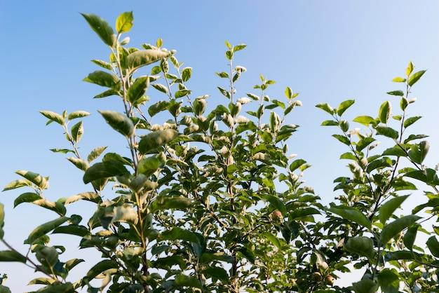 Koncepcja Rolnictwa Z Roślinami Niski Kąt Darmowe Zdjęcia