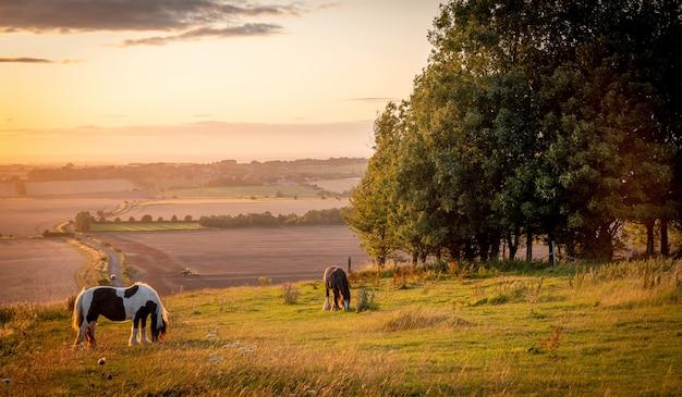 Konie Pasące Się W Wiejskim Krajobrazie W Ciepłym świetle Słonecznym Z Niebieskimi żółtymi I Pomarańczowymi Kolorami Pasącymi Się Trawami I Rozpostartym Widokiem Premium Zdjęcia