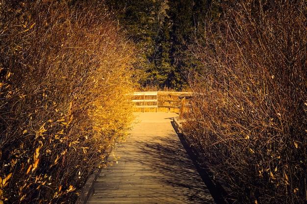 Koniec Szlaku Do Stawów Bobrowych W Rocky Mountain National Park W Kolorado Premium Zdjęcia