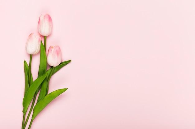 Kopiowanie Miejsca Kwitnące Tulipany Na Różowym Tle Premium Zdjęcia