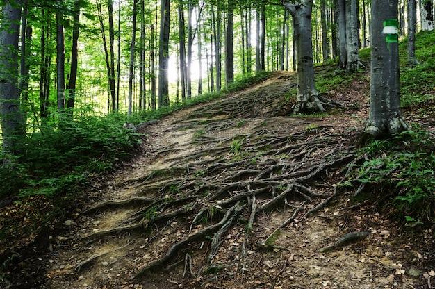 Korzenie Drzew Leżą Na Ziemi Premium Zdjęcia