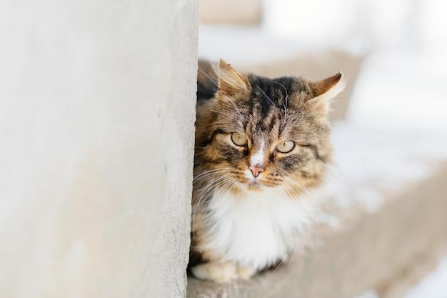 Kot Czeka Na Mistrza Na Zewnątrz Premium Zdjęcia