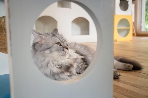 Kot domowy schłodzony w kawiarni Premium Zdjęcia