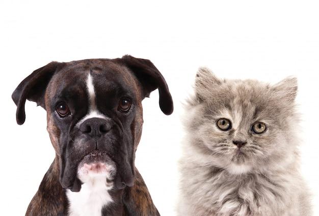 Kot I Pies Na Białym Tle Premium Zdjęcia