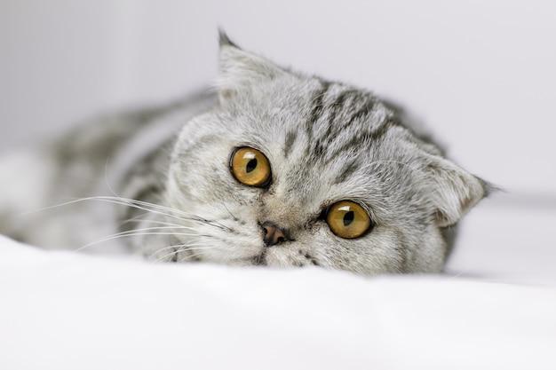 Kot jest przysiady na białym łóżku w pokoju. Premium Zdjęcia